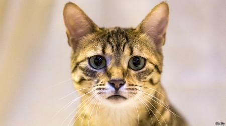 Активисты требуют от Швейцарии запретить поедание кошек