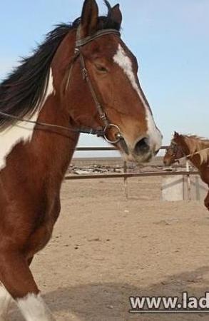 В Мангистау двое мужчин зарезали чужую лошадь
