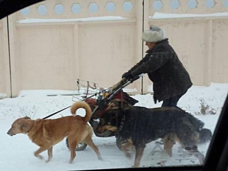 В Актау на женщину напали собаки