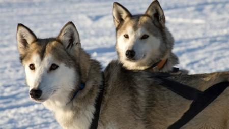 Трогательная собачья дружба