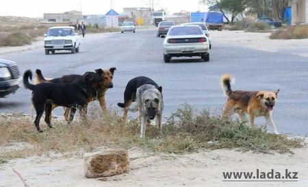 На отлов бродячих животных в Актау в этом году потратят более 5 миллионов тенге
