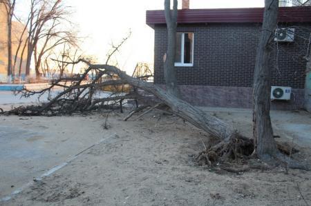 Жители одного из домов Актау пять дней добиваются вывоза упавшего дерева