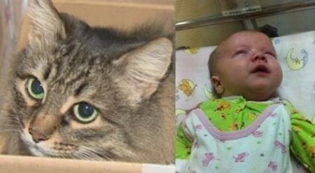 Кошка стала звездой мировых СМИ после спасения ребенка-подкидыша