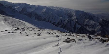 Близ Алматы турист встретил снежного барса
