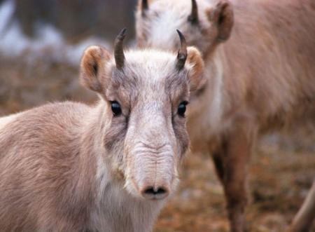 Необычные животные Казахстана