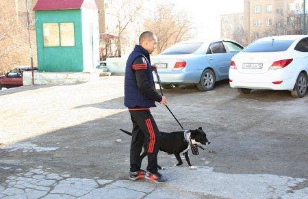 Волонтеры: В Актау работники автостоянки содержат в ужасных условиях ощенившуюся собаку