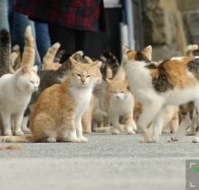 Японский остров захватили кошки