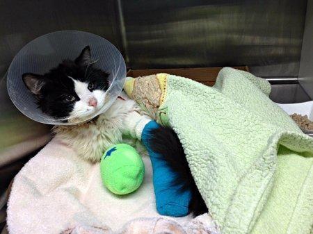 На лечение замученного живодером котенка собрали 13 тысяч долларов