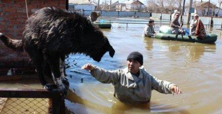 Казахстанцев просят помочь пострадавшим от паводка в Акмолинской области