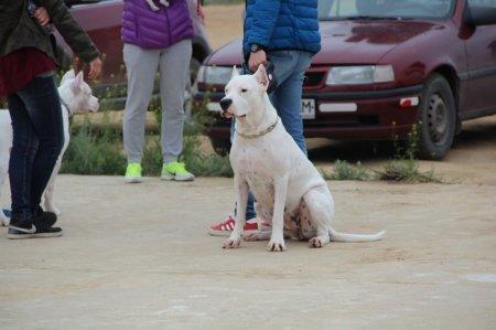 В Актау определились победители выставки собак «Каспийские звезды»