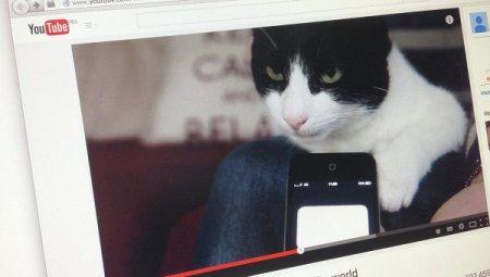 Британский кот установил новый рекорд Гиннесса по громкости урчания