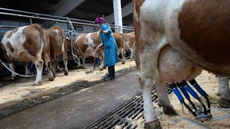 Таможенному союзу предложили единые цены на молоко