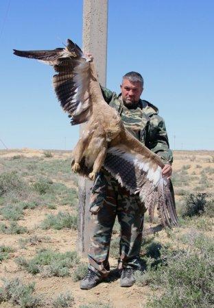 Марк Пестов: В Мангистау популяция степного орла сократилась на 90 процентов