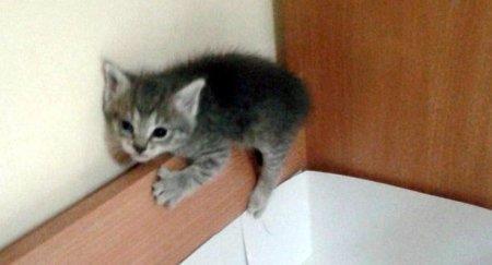 Котенок ищет новых хозяев