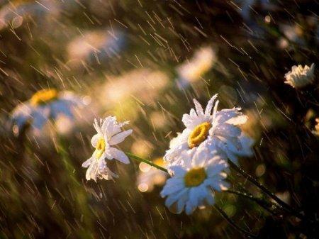 Дожди и ветер ожидаются в Казахстане во вторник