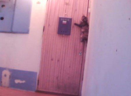 Умная кошка из России звонит в дверной звонок