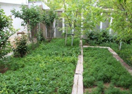 Перепелиная ферма в маленьком оазисе