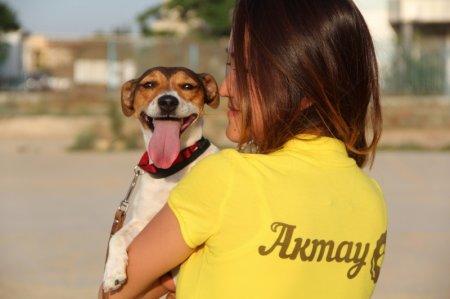 Собаководы Актау представят своих питомцев на международной выставке в Уральске