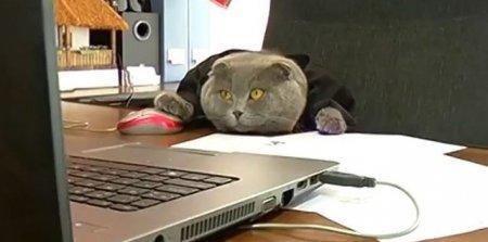В Румынии кота наняли рекламным менеджером