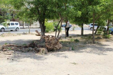 Жители первого микрорайона Актау выступают против строительства парковки