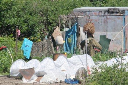 В действиях дачницы, вывесившей флаг в огороде рядом с пугалом, нет состава преступления - полиция