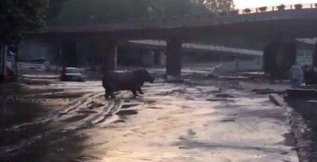 Более 30 зверей, сбежавших из зоопарка при наводнении, ищут в Тбилиси