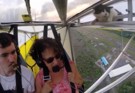 Пилот обнаружил во время полета кота на крыле самолета