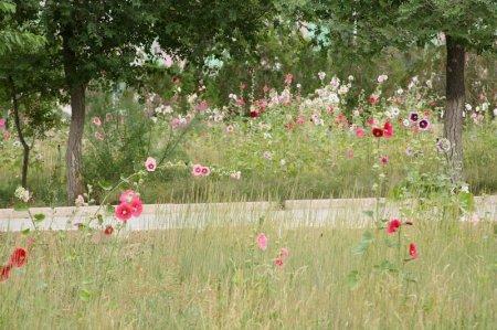 В Актау все сохнет, а Жанаозене все цветет