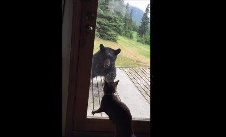 Медведь упал с крыльца, испугавшись домашней кошки