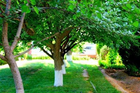 Фотоистория: Будет желание - будет город-сад!