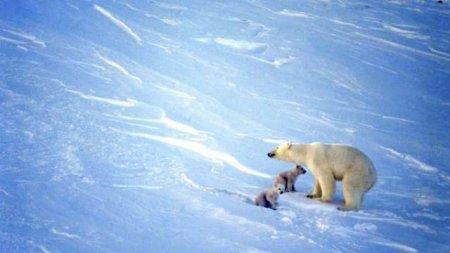 Ученые: Земле грозит три века невиданных морозов