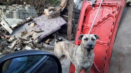Во дворе костанайца живут более 150 собак