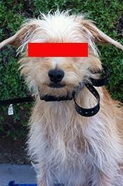 """Собака """"под кайфом"""" выдала хозяина-наркодилера в США"""