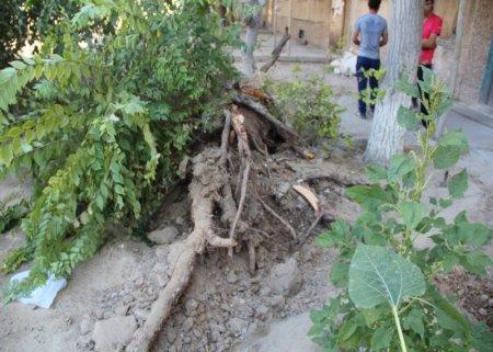 В Актау на Porsche Cayenne упало дерево
