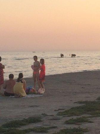 Кони в море
