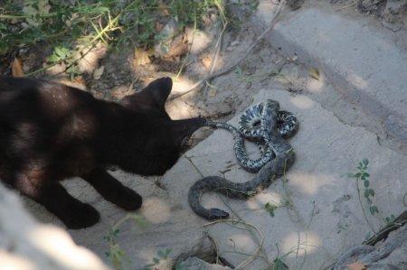 А у нашей кошки новая игрушка