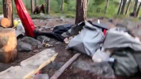 Туристы под Мурманском отогнали от лагеря медведя необычным способом