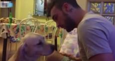Видео с извиняющейся собакой покоряет Сеть