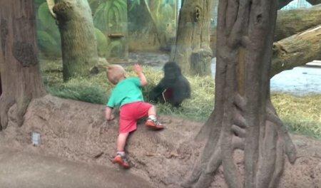 Детеныш гориллы сыграл в прятки с ребенком в зоопарке