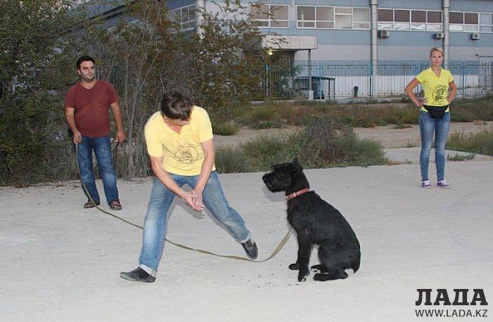 Человек собаке друг —  это знают все вокруг...