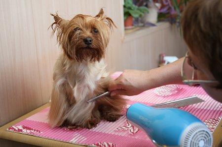Профессия грумер. Парикмахерская для собак