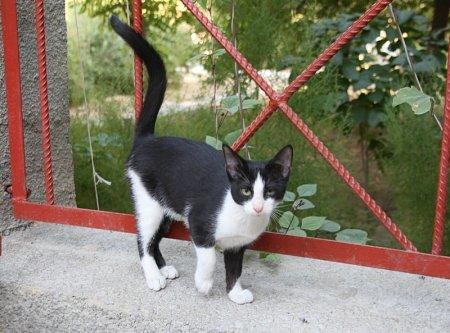 Кто потерял милого котенка?