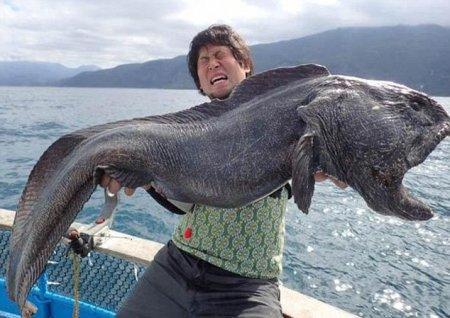 Рыбак поймал странного монстра у берегов Японии