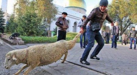 Главный муфтий Казахстана не советует делать селфи с животными на Курбан-айт