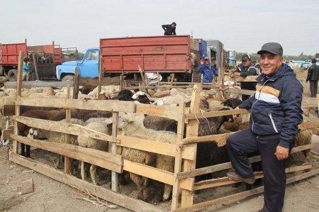 Сколько стоит барашек к празднику Курбан айт в Казахстане