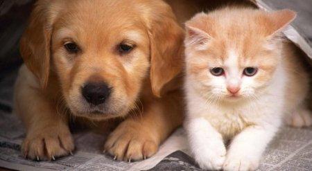 Астанчанам могут запретить заводить домашних животных без согласия соседей