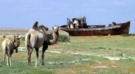Проблемы Аральского моря представляют угрозу всему миру - Президент Казахстана