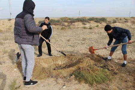 Молодежь Актау высадила деревья вдоль дороги в аэропорт