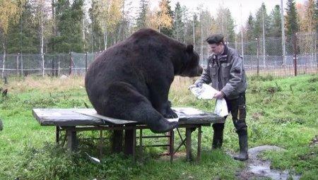 Нарисованные медведем картины продаются по 300 евро за штуку