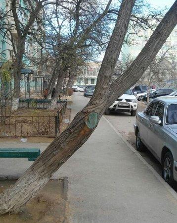 Берегись дерева